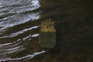 watermoods